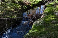 Petit ruisseau dans la fort (sosivov) Tags: reflection green nature water forest landscape sweden