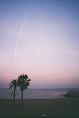 untitled (amanda aura) Tags: barcelona sky tree film beach nature landscape spain olympusom1