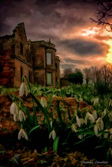 Snowdrops At Kirklinton Hall (Light+Shade [spcandler.zenfolio.com]) Tags: uk flowers england building geotagged ruins cumbria snowdrops photoart oldbuilding lightshade stephencandler kirklintonhall stephencandlerphotography spcandler httpspcandlerzenfoliocom stephencandlerphotography
