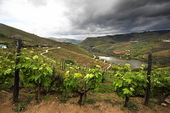 Douro 1 (gsamie) Tags: sky mountain portugal clouds canon river landscape wine wideangle porto grapes douro grapevine t3i portwine sandeman 600d quintadoseixo gsamie guillaumesamie
