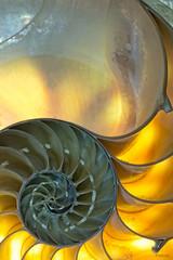 _T2A9446.jpg (jrvsparky) Tags: life stilllife still shell nautilus nautilusshell