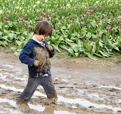 Playing in the mud 4 (Getting Better Shots) Tags: flowers flora mud skagit tulipfestival