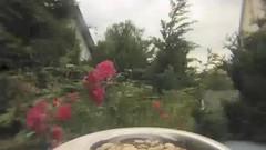 Eichhornchen (peterhsk77) Tags: tiere squirrel wald esquilo meise ardilla eichhrnchen scoiattolo vulgaris cureuil eiche eichkatzerl sciurus jgerfest oachkatzl eichkatzl
