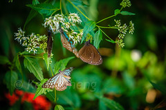 Taiwan-121113-280 (Kelly Cheng) Tags: travel color colour green tourism nature animals horizontal fauna butterfly daylight colorful asia day taiwan vivid nobody nopeople colourful traveldestinations  northeastasia