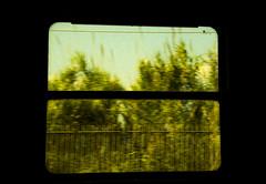 Paesaggio pittoresco (BlumBlu) Tags: windows tree verde green nature train landscape natura finestra viaggio paesaggio poetico