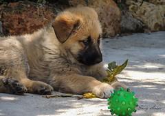 Cachorrito (argosu) Tags: naturaleza dogs nature animal natural perro animales libre mascota
