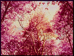 nightingale park (Dr. Alex O Chevtchenko) Tags: film kodak hasselblad infrared cz 6x45 e6 60 orangefilter aerochrome 205tcc