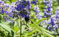 Giant Bees in Georgia! (Xynalia) Tags: park atlanta nature georgia centennial olympics