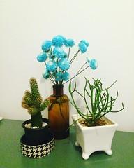 #naturezavivanumero2 #slowlife #❤️ #flowerpower #cactus #suculenta #colorchart #nature #indoor #smallgardens (Projeto [cdr]) Tags: square squareformat clarendon iphoneography instagramapp uploaded:by=instagram