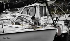 le marin (png nexus) Tags: bw nb desaturation bateau