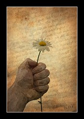 Please (patrick.verstappen) Tags: photoscetcher ipiccy hand flower camille camomille text texture textured photo picassa pinterest pat picmonkey paper ipernity image imagine inspirational inspiration yahoo belgium gingelom google flickr facebook sigma summer nikon d7100 june please painted
