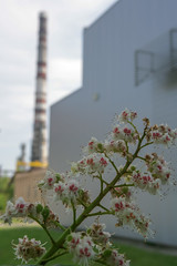 flowered chestnut-4 (algimantas_tirlikas) Tags: autumn chimney building spring may flowersplants