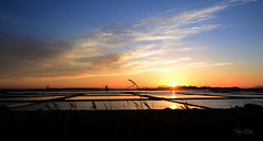 Saline di Marsala (danars) Tags: tramonto mare acqua riflessi saline sicilia mulini stagnone