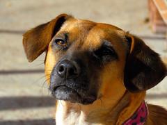 Mini. (jagar41_ Juan Antonio) Tags: animal perro perros animales mascotas