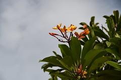 Nusa Dua, Indonesia (Nam__b) Tags: bali plant flower nature indonesia outdoor