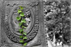 Pre Lachaise 3 (fred_kd) Tags: cimetire pre lachaise paris paysage noir et blanc landscape nikon d3100