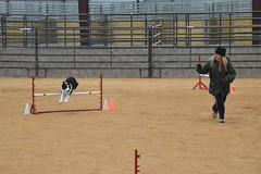 agility255 (jaimekay16) Tags: dog training austin agility k9 xpress nadac k9x