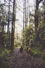A Journey Through The Trees (Nelson YK) Tags: morning autumn trees portrait green fall nature forest trekking landscape hiking tracks australia victoria calm hike macedon