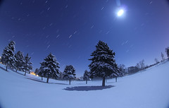 The Moonlit Pines (Radical Retinoscopy) Tags: trees winter snow tree pine night lowlight mac pennsylvania fisheye pa pines astrophotography lancaster astronomy snowfield lancastercounty pinetrees freshsnow startrail nightsnow snowatnight snowonpines moonlightonsnow moonlitsnow canon815mm starstax