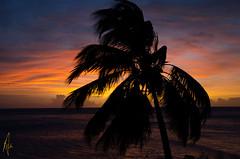 sunset 130415 (Izzysan) Tags: sunset nikon seascapes ngc palm dominica nikondslr lightstalking seascapeandshoreline dominicaimage dominicaphoto dominicaphotography