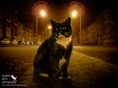 On the Prowl (barbara.jackson55) Tags: cat streetscene nightscene blackandwhitecat