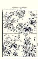Top  Japanese maple and hardy begonia; Bottom  Japanese morning glory and water-lily (Japanese Flower and Bird Art) Tags: morning flower art japan japanese book maple waterlily glory picture acer begonia begoniaceae nil hardy nihonga palmatum intaglio japonicum convolvulaceae aceraceae nymphaeaceae ipomoea grandis nuphar yasujiro matama readercollection