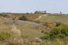 Coastguard Cottages, Hastings Country Park (ghostwheel_in_shadow) Tags: wild england house flower sussex flora europe unitedkingdom cottage hastings shrub bluebell eastsussex gorse domesticarchitecture hastingscountrypark coastguardcottage englandandwales architectureandstructures
