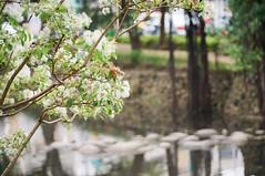 DSC04584 (mb10001114) Tags: river gates sony hsinchu taiwan   tassel         nex5t selp18105g epz18105mmf4g