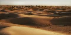 Dubai Desert (Christian_from_Berlin) Tags: travel trees sun yellow landscape sand dubai view desert outdoor dunes sony uae unitedarabemirates alpha6000