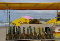 pineapple lover (helovpellegrini) Tags: brazil praia beach beauty yellow brasil canon photography eos amazing do foto with d amarelo lindo pineapple com brazilian manual frances amateur geotag processed 60 barraca abacaxi helo lightroom alagoas amadora pellegrini marechal tratada heloisa deodoro abacaxis 60d instagram helopellegrini helovpellegrini