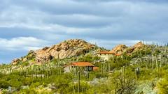 Coexistence.... (tomk630) Tags: homes arizona sky nature cacti landscape coexistance