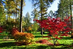 Autumn colours (charlottehbest) Tags: november autumn trees colours arboretum gloucestershire autumncolours westonbirt autumnal westonbirtarboretum 2015 charlottehbest