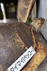 / Sea turtle (abandoned24) Tags: japan sony  okinawa seaturtle ishigaki   yaeyama    rx100m3