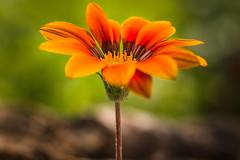 Orange (Sascha Wolf) Tags: orange plant flower nikon urlaub pflanze blume tamron
