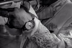 (Mac1968) Tags: mariachi mexicano musico musica tradicional mexicana musician trompeta trumpet guitarra guitar violin singer cantante tradicin folklore folkloric