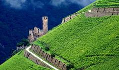 Rheingau (EOS1DsIII) Tags: eos1dsiii deutschland germany assmannshausen rheingau burgruine wein diagonal wineyard castle green blue blau grün ruineehrenfels elitegalleryaoi bestcapturesaoi