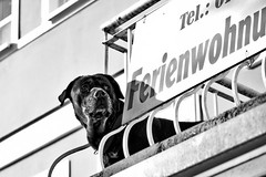 2015-03-08-Rostock-Warnemuende-20150308-102651-i215-p0034-_Bearbeitet1418-ILCE-6000-70_mm-.jpg