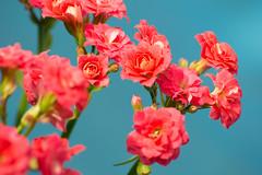 (ygormagalhes) Tags: flowers sun flores verde green folhas sol nature leaves rose azul arquitetura brasil architecture bokeh natureza flor paisagem modular rosas floresta mato goiânia paleta árvores goiás estrutura arquiteturamoderna