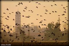 campanile e piccioni IMG_6195 (miriamdovidio) Tags: pigeons campanile piccioni paese dovidio albignano miriamdovidio