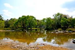 DSC_0135_2 (drs.sarajevo) Tags: india karnataka madikeri kaveririver dubareelephantpark