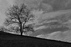 DSC_6453_2 (jean-marc losey) Tags: tree arbre contrejour paysbasque muret