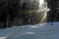 Haute Savoie, Combloux, contrejour, 1 (Patrick.Raymond (2M views)) Tags: france soleil nikon neige arbre hdr bois hautesavoie combloux rayondesoleil firet lacry nikonflickraward