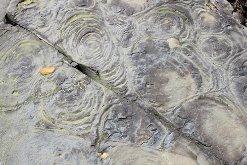 Fossils @ Kimmeridge Bay