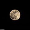 Tonights Moon Rising(99.6% Full) Northern Hemisphere