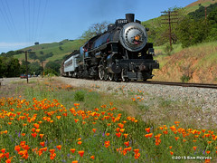 Poppies and SP Steam (samreevesphoto) Tags: steam southernpacific sunol 2472 nilescanyon