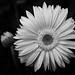Biltmore Conservatory Flower