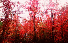 ellxs, lxs árboles (Felipe Smides) Tags: bosque valdivia fotografía smides felipesmides