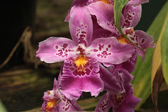 Orchids (Jeff Mitton) Tags: orchids wonders naturez mealybug earthnaturelife
