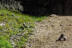 Contrast (Jori209) Tags: brown plant canada colour green nature contrast creek rockies canyon dandelion growth alberta banff rockymountains johnston banffnationalpark johnstoncanyon johnstoncreek
