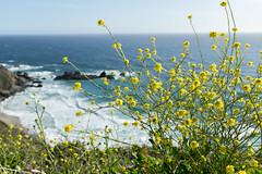 Scenic View from Highway 1 (blake.hawk) Tags: ocean california flowers canon rocks waves pch highway1 7d westcoast scenicroute